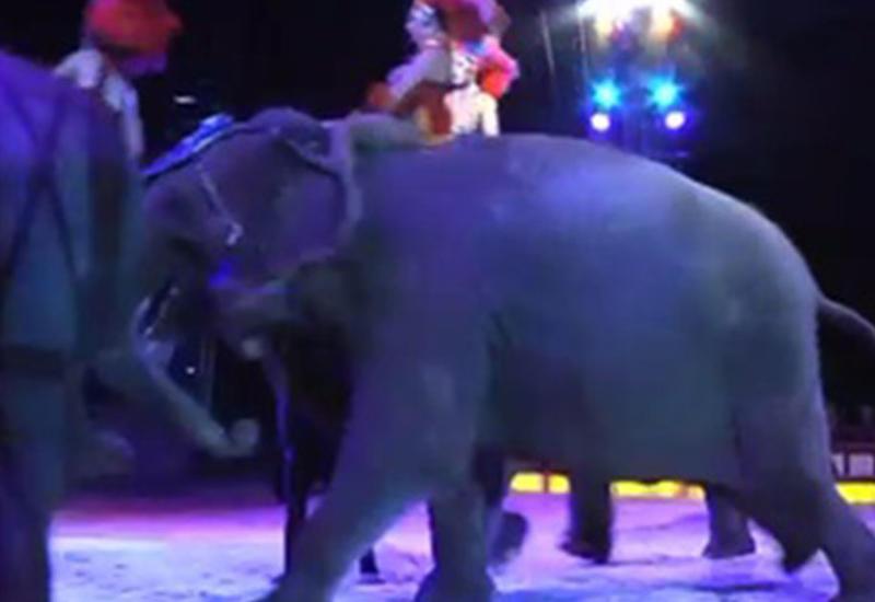 Цирковой слон протаранил толпу зрителей
