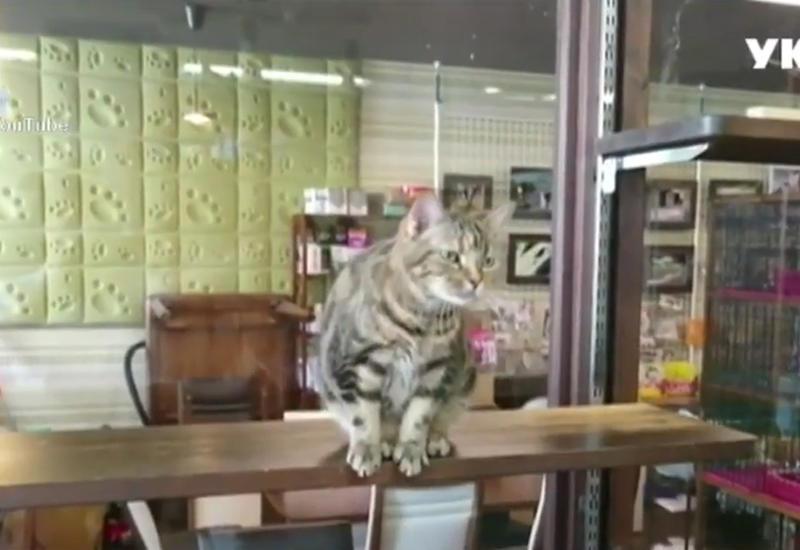 """Как коты в Японии реагируют на приближающееся землетрясение <span class=""""color_red"""">- ВИДЕО</span>"""