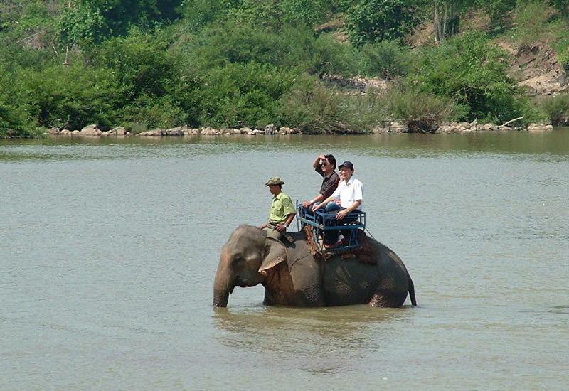 Туристам запретят кататься на слонах в национальном парке Вьетнама