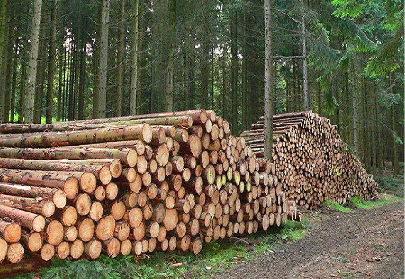 Генпрокуратура Азербайджана расследует факт незаконной заготовки древесины