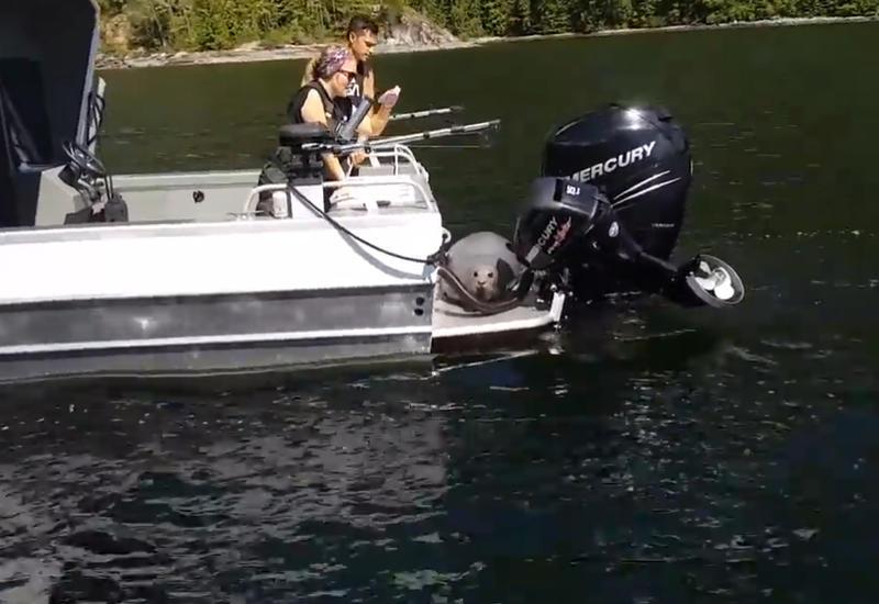 "Тюлень спасся на лодке от косаток <span class=""color_red"">- ВИДЕО</span>"