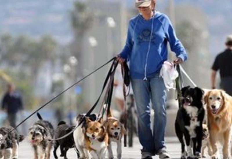 В Венгрии разрешили ходить на работу с собаками