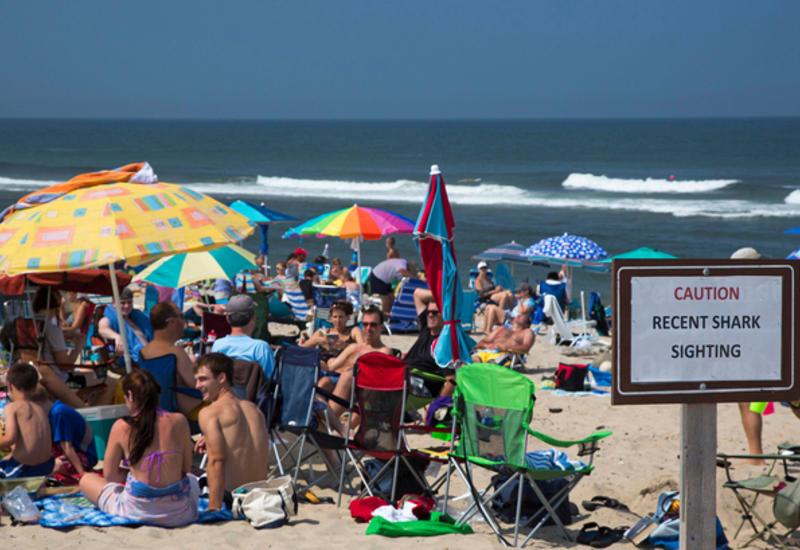В штате Нью-Йорк два пляжа закрыли из-за нападения акул на детей