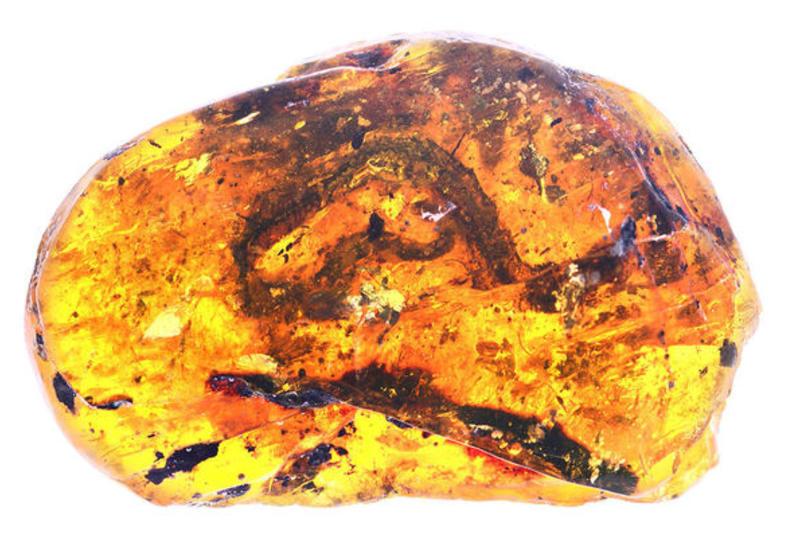 Впервые в куске янтаря был обнаружен доисторический детёныш змеи