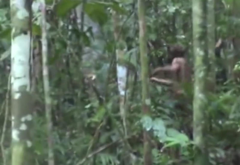"""Выживающий в джунглях одинокий туземец впервые попал на видео <span class=""""color_red"""">- ВИДЕО</span>"""