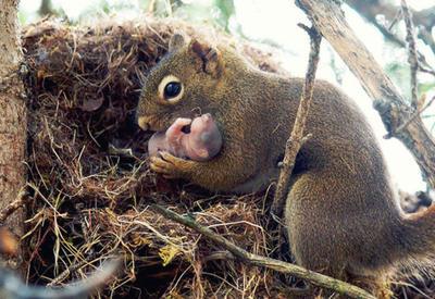 25 животных, которые научат быть хорошими родителями
