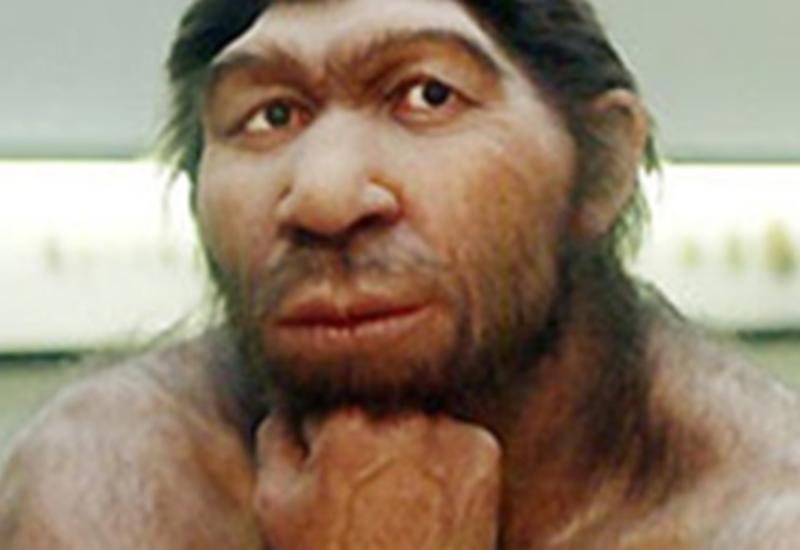 Неандерталец и гомо сапиенс: чем они отличаются