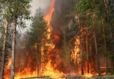 В Сибири горят около 30 тысяч гектаров леса
