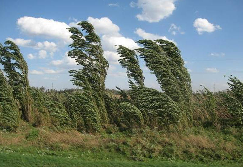 Минэкологии прокомментировало аномальные ветра на Абшероне