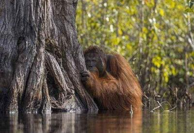 15 фотошедевров с конкурса «Лучшая фотография природы» от National Geographic
