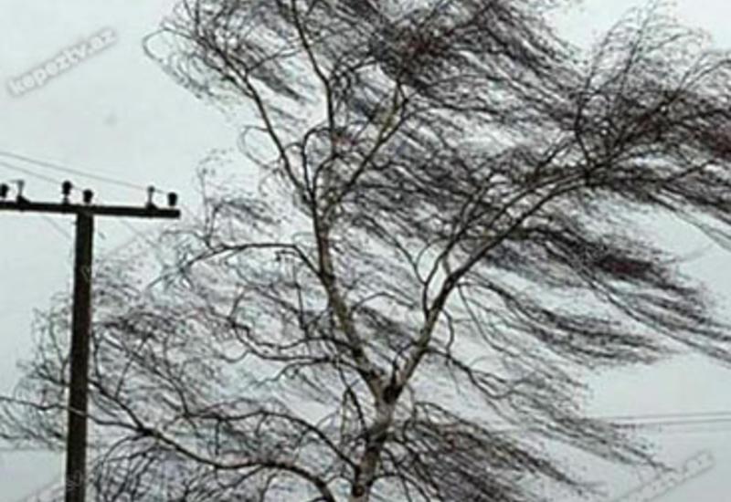 Министерство о сильном ветре в Баку