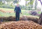 """В Азербайджане на картофельных полях обнаружены вредители <span class=""""color_red"""">- ФОТО</span>"""