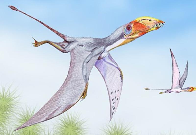 Палеонтологи выяснили, когда птерозавры захватили Землю