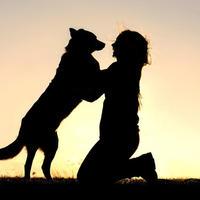 Смертельные ласки: как убивает собачья слюна