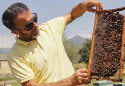 В Азербайджане может быть создан Институт пчеловодства