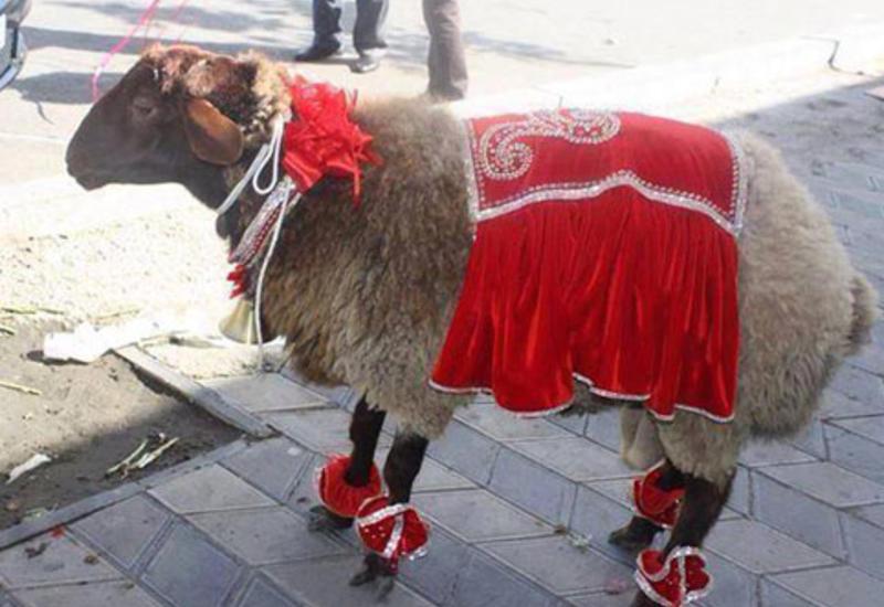 В Азербайджане откроются ярмарки в связи с праздником Гурбан