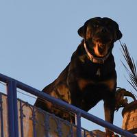 Накого чаще всего нападают собаки