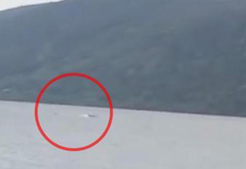 Турист снял на пляже нечто, похожее на водяное чудовище