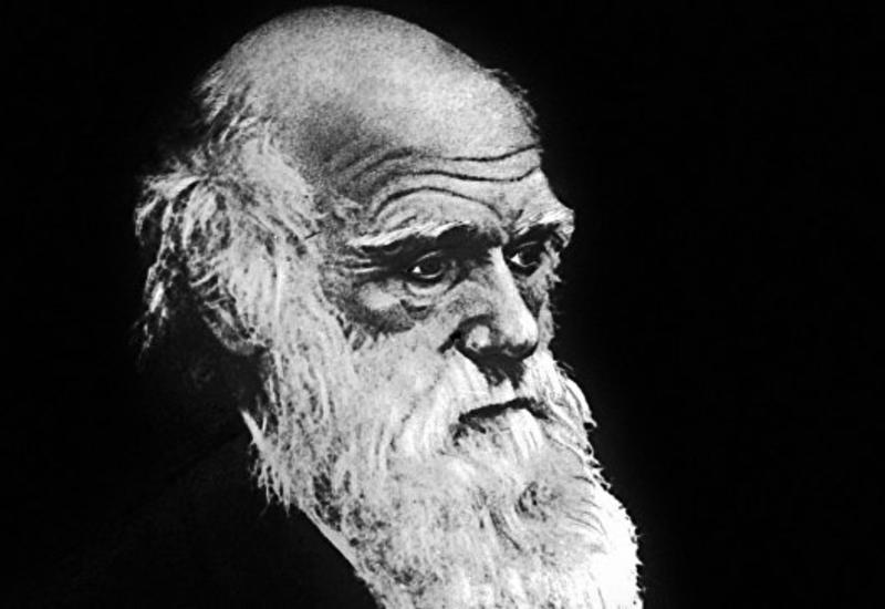 """Биологи признали лень """"главным двигателем"""" эволюции"""