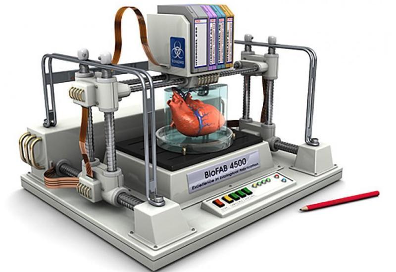 Alimlər bioprinterdə insan damarları çap ediblər