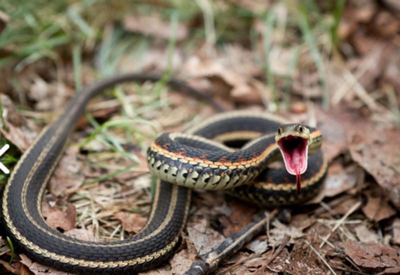 В Азербайджане свыше 100 человек были укушены змеями, скорпионами и пауками