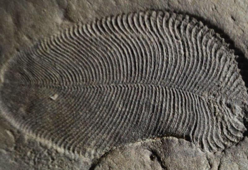 В России найдены останки древнейшего животного на Земле