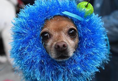 Ученые опровергли миф о необыкновенном интеллекте собак