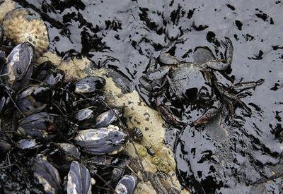 Ученые нашли бактерии, способные очищать загрязненные нефтью территории