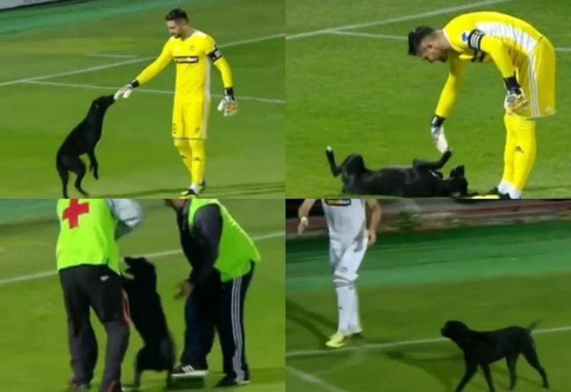 Пес прервал матч чемпионата Грузии по футболу
