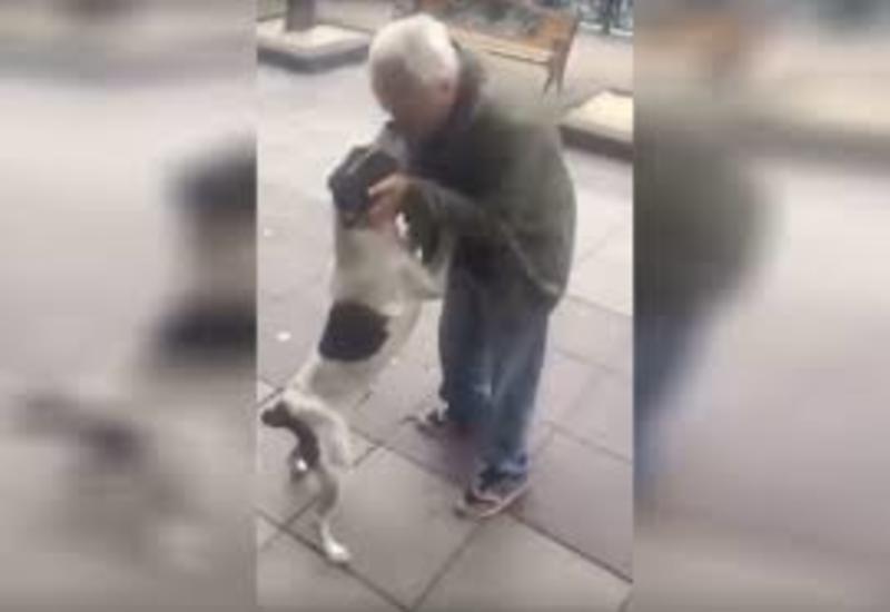 Житель Тбилиси нашел свою собаку на улице спустя три года