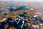5удручающих фактов оБольшом тихоокеанском мусорном пятне