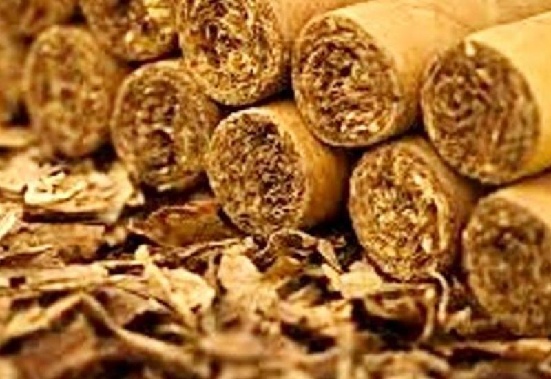 Крупный азербайджанский производитель табака намерен произвести 3 тыс. тонн продукции