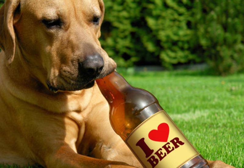 Супруги изСШАсоздали «пиво» длясобак