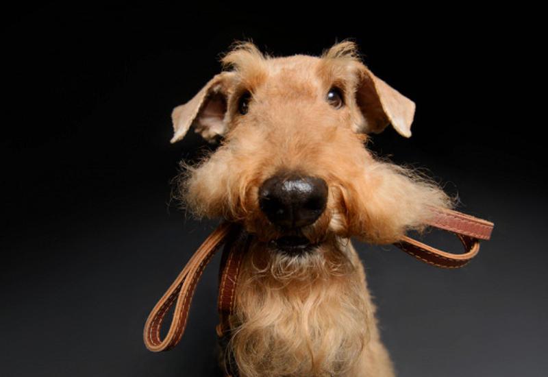 """Владельцам собак легче найти любовь <span class=""""color_red"""">- ИССЛЕДОВАНИЕ</span>"""