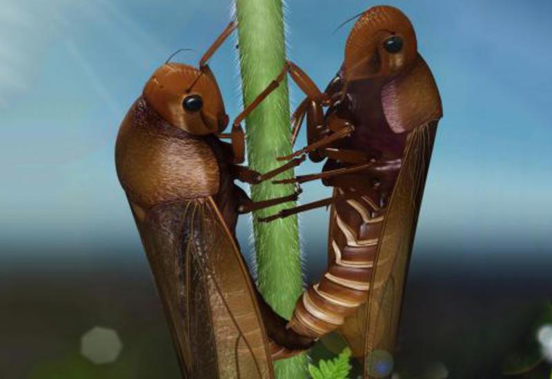 Ученые обеспокоены массовым вымиранием насекомых