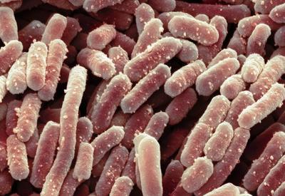 Как сделать любые бактерии безвредными?