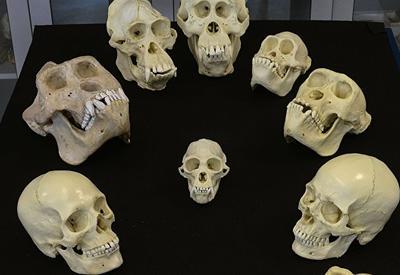 Ученые не нашли ничего необычного в вариациях формы черепа человека