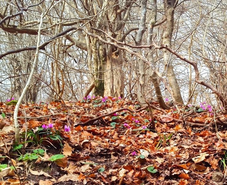 Буйство красок: 6 лучших осенних пейзажей Азербайджана