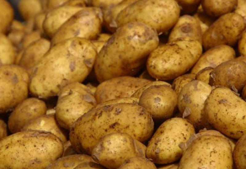 В завезенном из Ирана картофеле обнаружены вредители