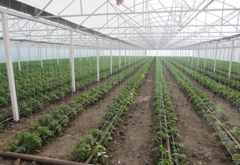 В Азербайджане создаются новые теплицы