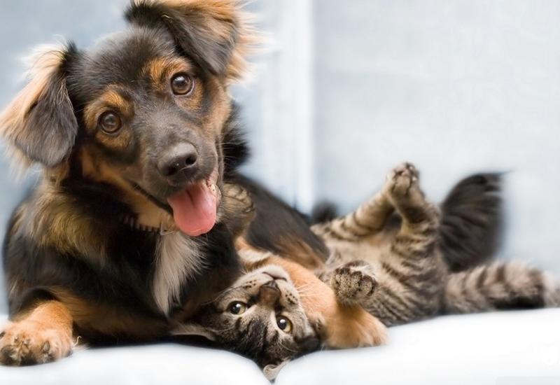 """Немедленно отнесите свою кошку или собаку к ветеринару, если она прижимается головой к стене <span class=""""color_red"""">- ВИДЕО</span>"""