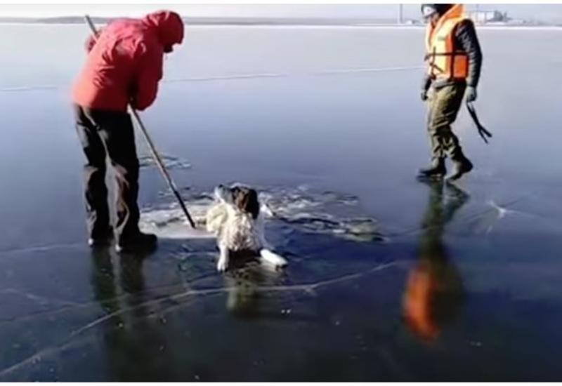 "Спасатели освободили собаку, вмерзшую в лед <span class=""color_red"">- ВИДЕО</span>"