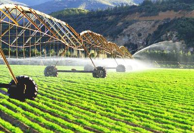 Азербайджан выводит сельское хозяйство на новый уровень  - ПОДРОБНОСТИ