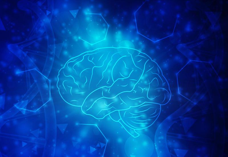 Чем мужской мозг отличается от женского