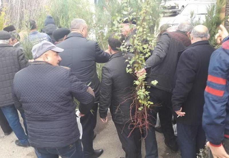 """Azərbaycanda 120 minə yaxın pulsuz ağac tingi paylanıldı <span class=""""color_red"""">- FOTOLAR</span>"""