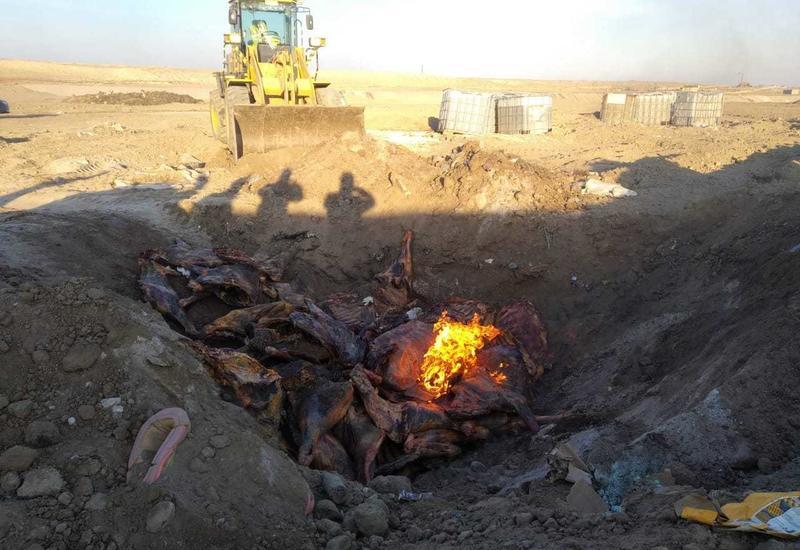 "В Азербайджане уничтожено 2.5 тонны мяса неизвестного происхождения <span class=""color_red"">- ФОТО</span>"