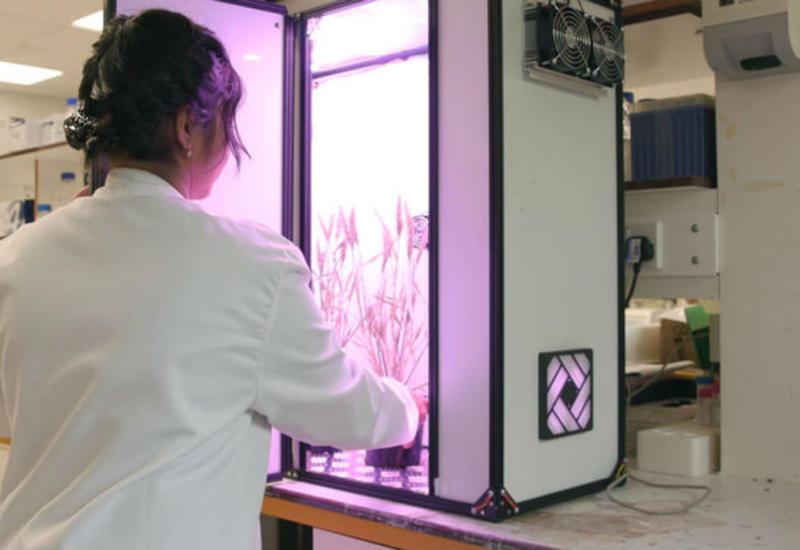 Космические технологии помогут накормить человечество