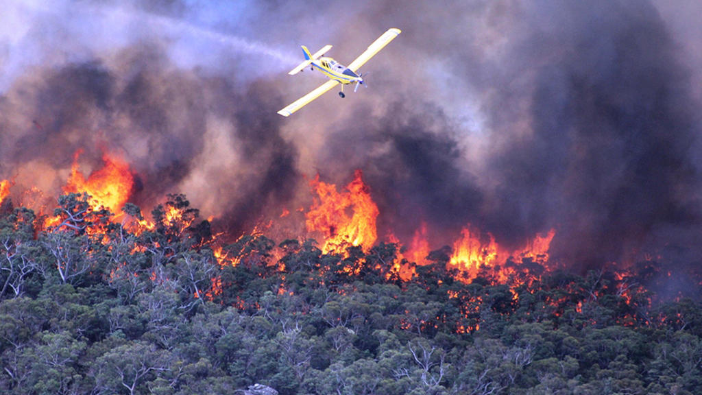 Тысячи людей эвакуированы в Австралии из-за лесных пожаров