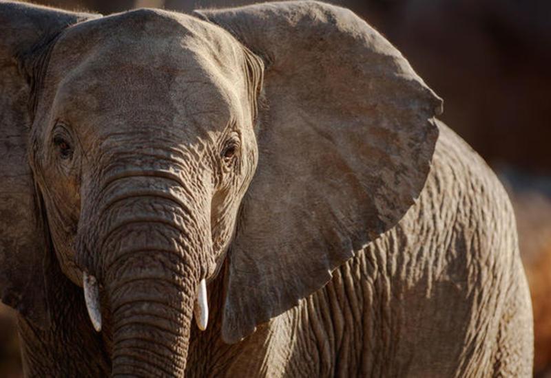 В Таиланде водитель погиб при столкновении с диким слоном