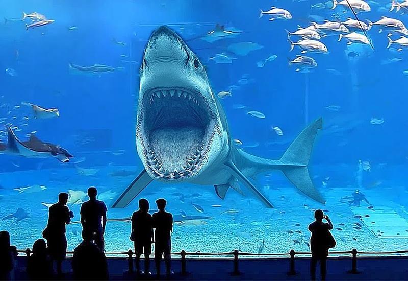 Почему ни в одном аквариуме мира нет большой белой акулы